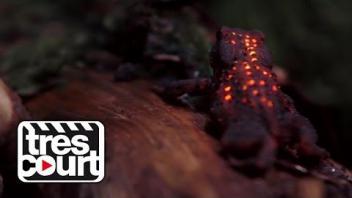 Des lumières dans la nuit - Forêt bioluminescente